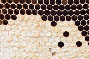 honeycomb with sweet honey