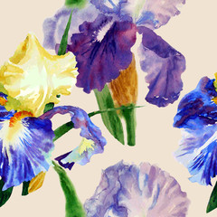 Seamless pattern  with color irises