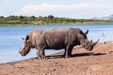 Rhinos Wildlife