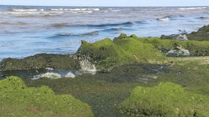 Eutrophication of the Baltic Sea