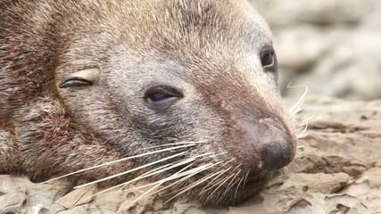 Blinking seal