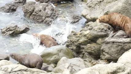 Three seals climb on the rocks