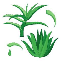 Aloe vera vector set