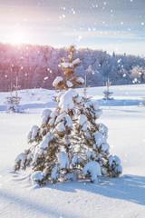 Snow-covered fir tree and sundown
