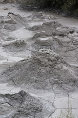Volcanic mud. New Zealand