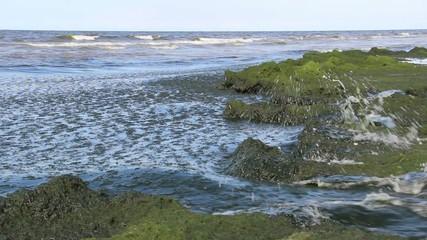 Eutrophication of the Baltic Sea 5