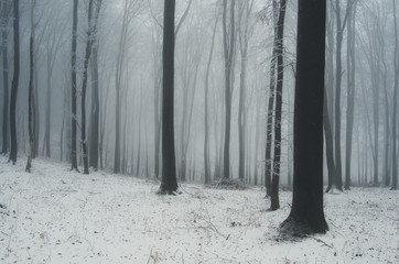 misty winter forest landscape