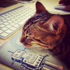 Cat Nap after Work