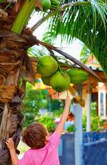 kid harvests the young coconuts in tropical garden
