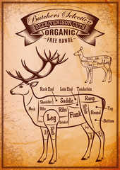 vector diagram cut carcasses deer