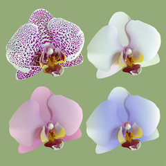4 isolated flowers of orchids lilac, blue, white, pink