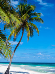 Beach in Mexico with palm trees