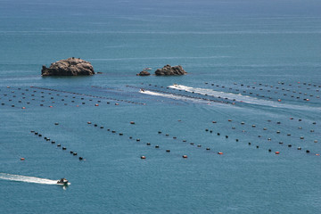 Mussels farm, New Zealand