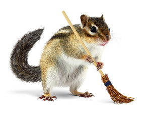 Funny chipmunk holding broom