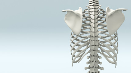 Struttura scheletrica umana