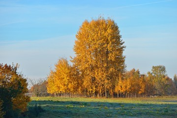 Trees in the field in Autumn