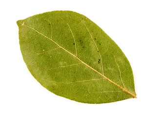 Macro closeup of dried bay leaf