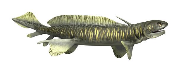 Orthacanthus - Prehistoric Shark