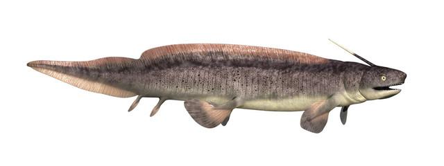 Xenacanthus: Prehistoric Shark