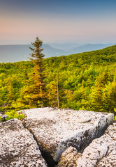 Morning view from Bear Rocks Preserve, in Dolly  Sods Wilderness
