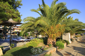 Palm trees on the site of Anthemus Sea Beach Hotel.