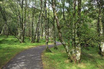 Beautiful footpath in Wicklow