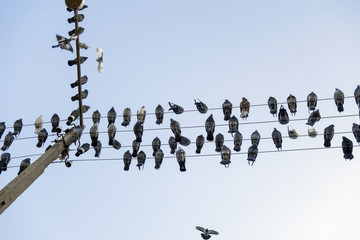 pigeons sit on wires