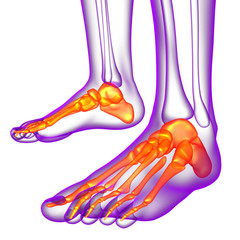 3d render medical illustration of the feet bone