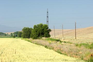 energy poles. wheat