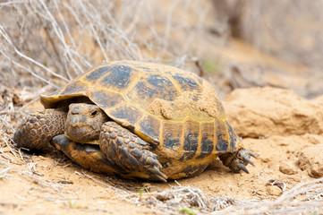 Turtle on nature