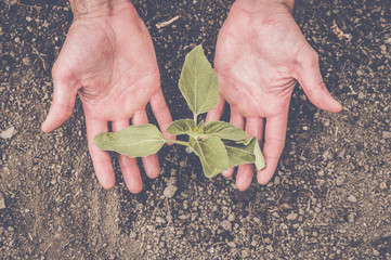 Hands holding a little plant recently planted in the ground