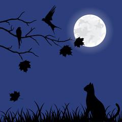 Illustration of a cat wathcing birds at night