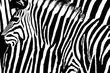 Graphic abstract design of a zebra