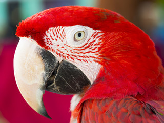 close up shot on eye of red macaw