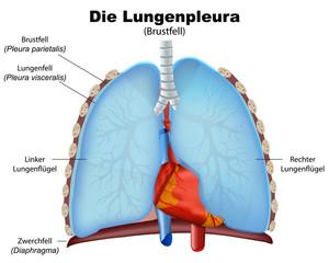 lungenpleura, pleura der lunge vektor illustration