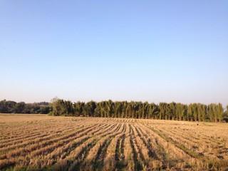 after harvesting