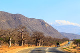 Road through the baobab forest valley in Tanzania