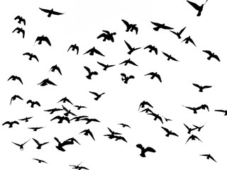 silhouette of flying birds on white
