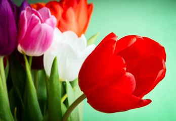 Tulips over green background