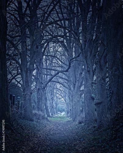 Dunkler Waldweg.