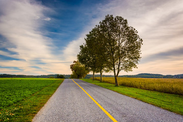 Trees and fields along a road in rural York County, Pennsylvania