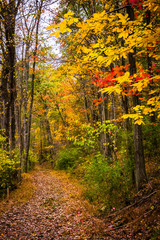 Autumn colors along a trail in Nixon Park, near York, Pennsylvan