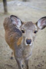 Cute baby deer portrait