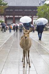 Deers in crowded Nara park