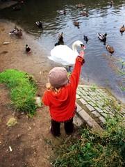 Kleines Mädchen füttert Enten