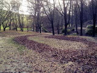 strada di foglie nel bosco