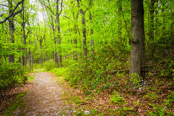 Trail through the forest near Skyline Drive in Reading, Pennsylv