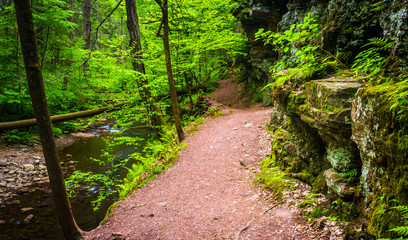 Trail along a stream at Ricketts Glen State Park, Pennsylvania.