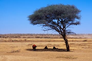 Africa Savanna landscape