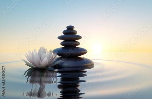 Weiße Lotusblüte und Steine im Wasser